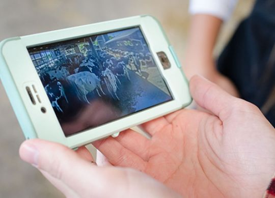 How To Effectively Use Video Monitoring On The Dairy
