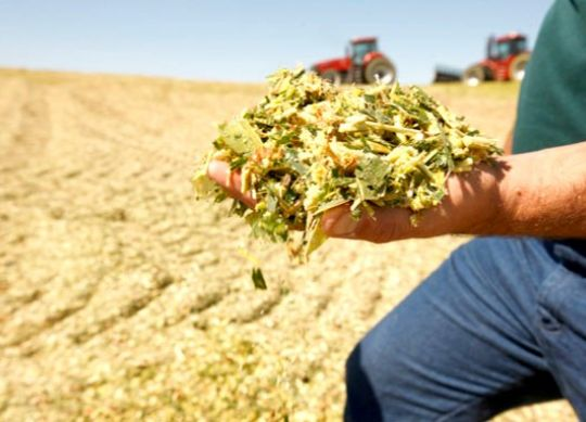 Good Management Practices Increase Silage Safety