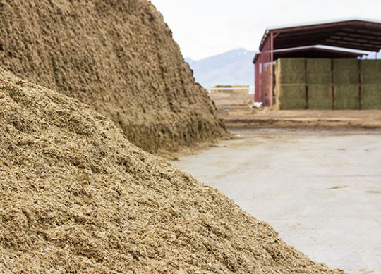 Make a Smooth Transition to New Corn Silage