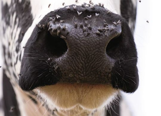 Pest management program for your dairy operation