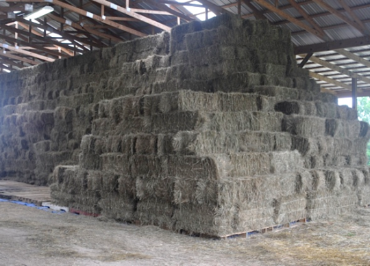 What is standing hay worth in 2017?