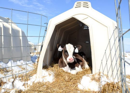 Dairy Farm Winter Preparedness