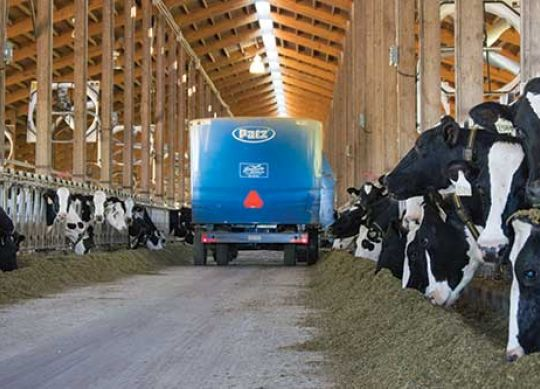 Cows Crave Consistent Feed