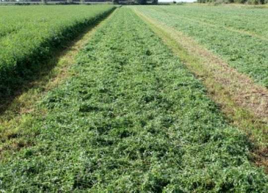 Forage Quality Drives Milk Production