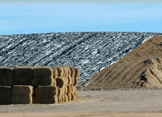 Plan A Silage Strategy