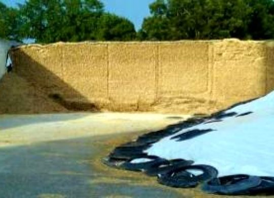 Managing Silage Bunkers in Warm Weather