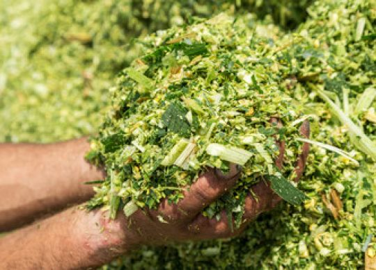 9 Tips for Creating High-Quality Silage