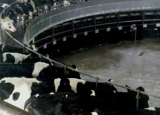 6 Tips for Maximizing the Milk Parlor