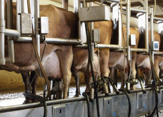 A key part of maintain-ing high levels of milk quality is making sure the facili