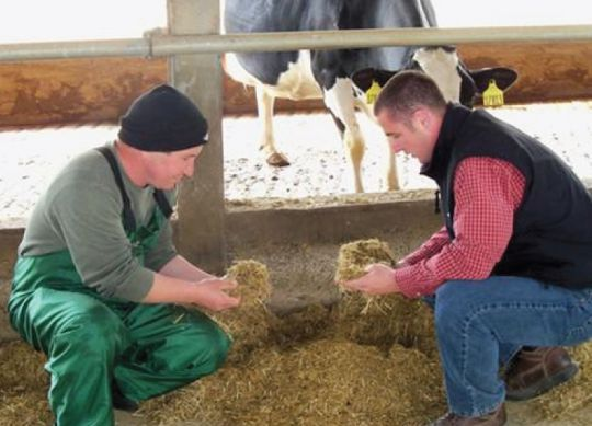 Nobis Agri Nutritionist working with a dairy producer