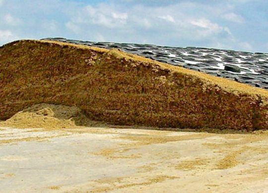 Silage Considerations