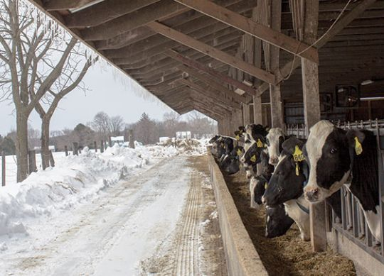 Five Steps to Winter Farm Prep