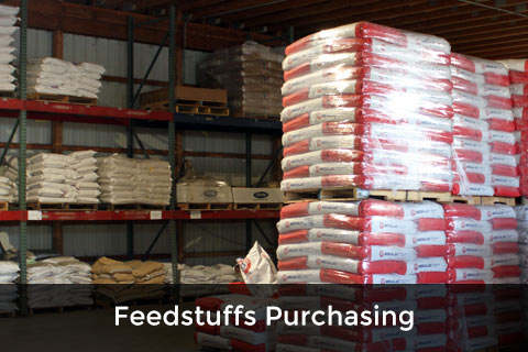 Feedstuffs Purchasing