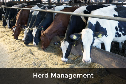 Herd Management